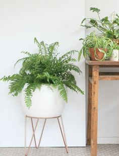 This Mid-Century inspired metal plant stand exudes a simple beauty and can be displayed on its own or layered in different interior schemes. Perfect