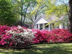 Picture of Spring blooms in a residential garden, Texas   PlanetWare