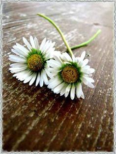 Sei dankbar für das, was du hast. Warte auf das Übrige, und sei froh, dass du noch nicht alles hast. Es ist auch ein Vergnügen, noch auf etwas zu hoffen. — hier: Neverland.