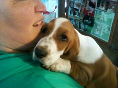 Our New Bassett puppy named marge