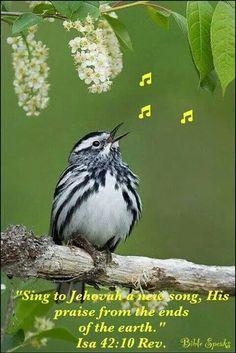 Psalm 150:6 Every breathing thing—let it praise Jah. Praise Jah!