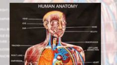 How to study anatomy easily