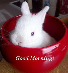 Good Morning! (02/06/14)- just a bunny in your cereal bowl!