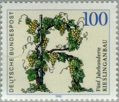 500 Years of Riesling Grape Cultivation