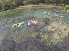 Salt Springs Recreation Area - Ocala National Forest. Beautiful Florida Natural Springs! Must see!
