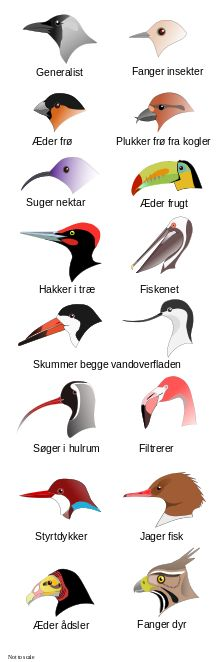 Fugle - Wikipedia, den frie encyklopædi