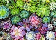 11 Creatively Stylish Ways to Display Succulents #aloeveraplantindoor Vertical Succulent Gardens, Succulent Wall Art, Succulent Landscaping, Types Of Succulents, Colorful Succulents, Planting Succulents, Cactus Flower, Cactus Plants, Air Plants