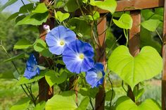 Old Fashioned Flowers for Garden - Classic Gardens and Landscape