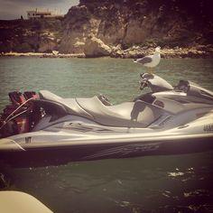 Até as gaivotas gostam das Waverunners Yamaha!!