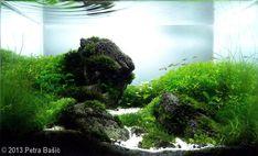 2013 AGA Aquascaping Contest - Entry #291