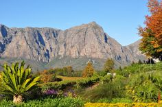 Ah, the wine country near Cape Town, south Africa : Paarl - Stellenbosch - Franschoek - see it to believe it :)