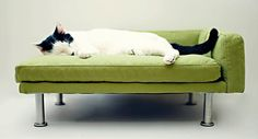 Modern Pet Bed, chaise lounge chair (Cat Bed / Small Dog Bed) from ModPet on Etsy. Saved to Pets. Modern Chaise Lounge Chairs, Chaise Lounges, Pet Furniture, Furniture For You, Modern Furniture, Modern Sofa, Vintage Furniture, Modern Decor, Cat Couch