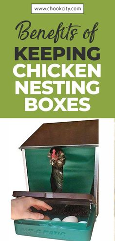 Let's check out the benefits of keeping chicken nesting boxes. . . . #ChookCity #Chicken #RaiseChickens #BackyardChickens #UrbanGarden #UrbanHomestead #Homestead #ChickenLove #Chickenlife #FarmLife #Chickens #Womenwhofarm #Farming #Farm #Farmer #ChickenNestingBoxes Backyard Coop, Backyard Chicken Coops, Backyard Farming, Chickens Backyard, Chicken Shed, Chicken Life, Diy Chicken Coop, Types Of Chickens, Keeping Chickens