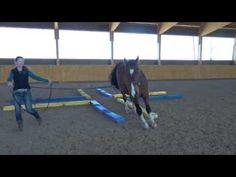 Trail Riding, Horse Riding, Horse Exercises, Horses, Animals, Youtube, Horse Anatomy, Horse, Horse Tricks