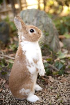 Elegant rabbit