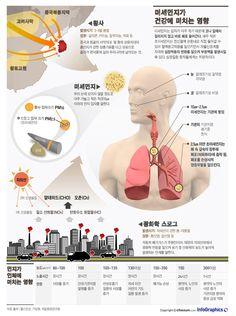 infographics / body / Lung / Design / Smog / yellow dust / 호흡기 질환의 '적' 황사·스모그, 어떻게 다를까?