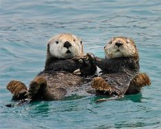 Just some photogenic otters holding hands http://ift.tt/2ERPV2f
