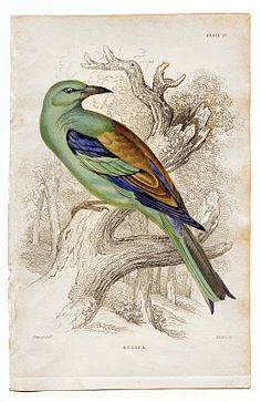 Free Vintage Clip Art - Colorful Bird - The Graphics Fairy