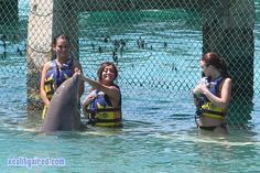 Snooki and JWOWW play with Dolphins in Cancun, how friggin cute :)