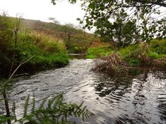 THE RIVER INNEY | Near St Clether, Cornwall     ✫ღ⊰n