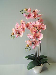 orchidee pink - Google zoeken