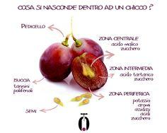 Com'è fatto un acino d'uva? infographic wine