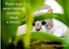 There is no more intrepid explorer than a kitten! @easyologypets
