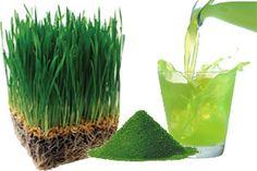 Wheatgrass (pasto de trigo), sus maravillosos beneficios y 10 tips para crecerlo en tu cocina.
