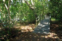 cahuita national park snorkeling hiking tour marsh bridge   - Costa Rica