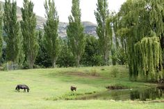 Clarens Photo Gallery Free State, Close Proximity, Golden Gate, South Africa, Photo Galleries, National Parks, Scenery, Places To Visit, Mountains