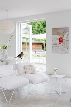 White room and a cat