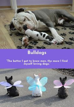 Head to the webpage to see more on Bulldogs  Simply click here for more... #Bulldogs #bulldoglove