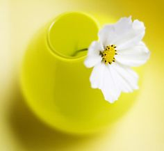 Floral Photograph - Little Yellow Vase by Rebecca Cozart