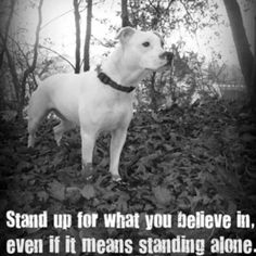 Stand up that's right. Keep standing and fighting for all Pitbulls and American bulldogs alw9