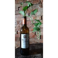 #vino #botellasdevino #winelovers #recicla #reciclando #diy #hogar #decoracion #interior #plantas #vinotinto