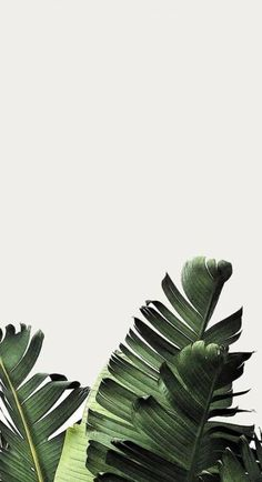 Tropical Jungle Leaves Pattern Green Foliage (Palms, Monstera & Banana Leaves) on White Background Natur Wallpaper, Plant Wallpaper, Tropical Wallpaper, Green Wallpaper, Iphone Background Wallpaper, Trendy Wallpaper, Flower Wallpaper, Wallpaper Samsung, Leaves Wallpaper