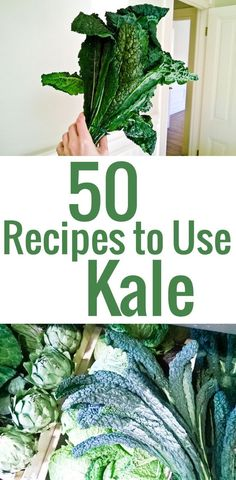 50 inspired recipe ideas to use kale and incorporate this superfood in your diet.