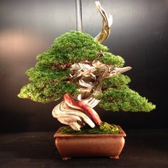 Mulhouse Bonsai EuroTop 30