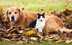 Znalezione obrazy dla zapytania cats and dogs in winter