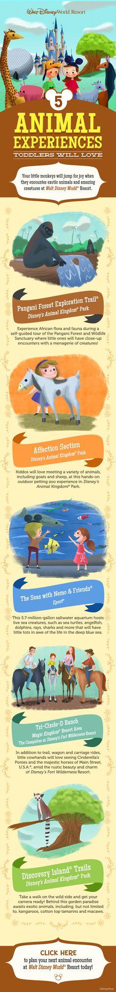 5 Animal Experiences Toddlers will Love at Walt Disney World! #vacation #DisneyKids #tips #tricks