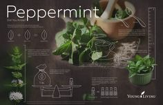 Essential Oils: 20 Uses of Peppermint Oil - Five Spot Green Living #livesimplynaturally #essentialoils