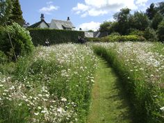 photos of meadow and meadow gardens - Google Search