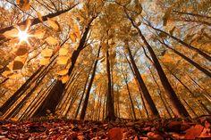 autumn*fall