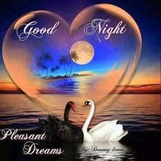 Here we have the bunch of cute new Good Night quotes, status and sayings for you. It& an innovative way to write cool Whatsapp status, Good night wishes in Cute Good Night Quotes, Good Night Photos Hd, Good Night Love Messages, Good Night Love Images, Romantic Good Night, Good Night Greetings, Good Night Gif, Good Night Wishes, Good Night Sweet Dreams