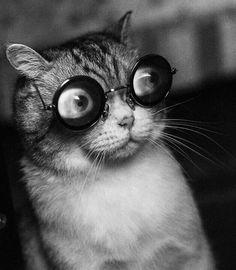 Strange cat.