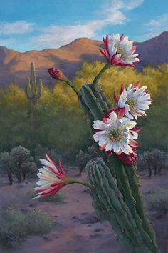 Oil painting of night blooming cactus by artist Lucy dickens. Cactus Painting, Cactus Art, Cactus Flower, Flower Art, Desert Flowers, Desert Plants, Plants Near Me, Cactus Plante, Southwestern Art