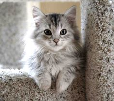 10 Best Cat-Friendly Dog Breeds Related posts:Cute Cats Maine Coon Kittens Waiting To Grow Up Into GiantsPeter Kaiser Pumps Ghana Blau Damen Peter Really Cute Kittens Cute Cats And Dogs, Cute Cats And Kittens, I Love Cats, Crazy Cats, Cool Cats, Kittens Cutest, Fluffy Kittens, Fluffy Cat, Kittens Meowing