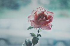 photography grunge flowers - Buscar con Google