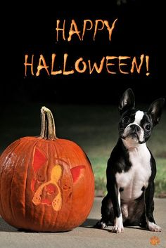 I know its a little late for Halloween pictures but this is so cute. And love the pumpkin!
