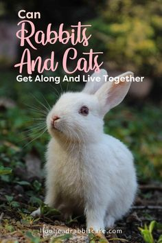 While cats are considered predatory animals and rabbits are considered prey, it is entirely possible for domesticated cats and rabbits to get along.However, getting a cat and a rabbit to live together and play together is a process; you can't just assume that they'll become fast friends. #rabbit #cat #petrabbit Bunny Care Tips, Rabbit Wallpaper, Rabbit Names, Rabbit Drawing, Rabbit Illustration, Living Together, Owning A Cat, Pet Rabbit, How To Gain Confidence